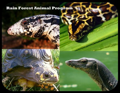 RainForestProgram