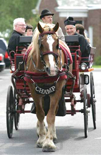 Carriage Ride image